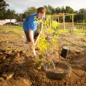 Anthony Waldrop and Natasha Tsaconas plant trees in 2012