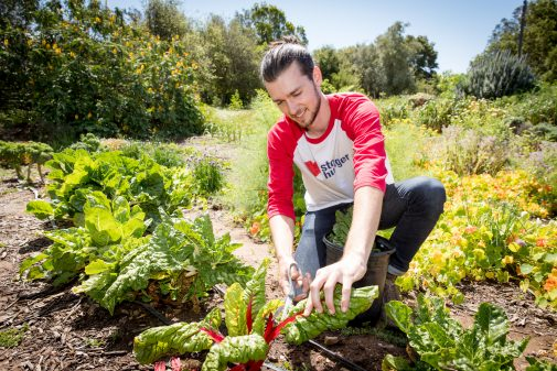 Chism harvests Swiss chard from the garden
