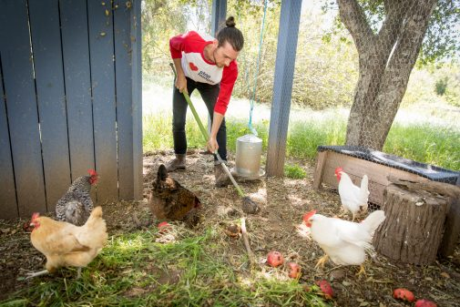 Kenny Chism keeps his egg-laying chickens healthy and happy