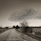 Jerry Siegel (American, b. 1958) Birds, Perry County, 2001, printed 2004 Archival inkjet print