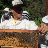 Talk to Comb 'Sustainable Beekeeping'